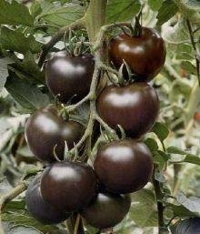 Tomates negros
